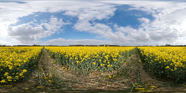 Field of Oilseed Rape, Marston Trussell 1 360° Panorama