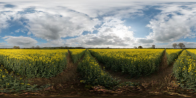 Field of Oilseed Rape, Marston Trussell 2 360° Panorama