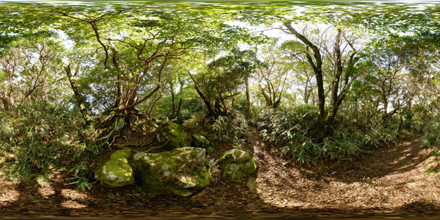 Forest path across the mountain, Hakone 360° Panorama