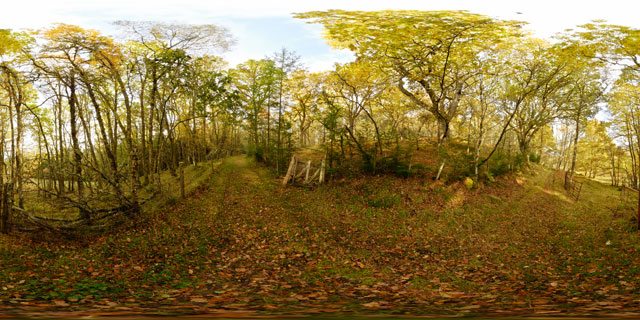 Meall Fuar-mhonaidh – track through woodland 360° Panorama
