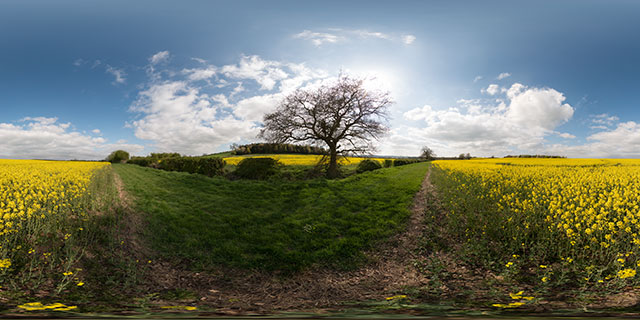 Oilseed Rape field, East Farndon 360° Panorama