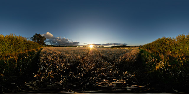 Sunset over wheat field 1 360° Panorama