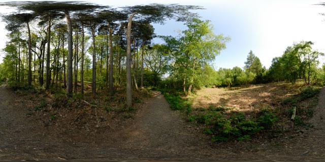 Wakerley Great Wood 1 360° Panorama