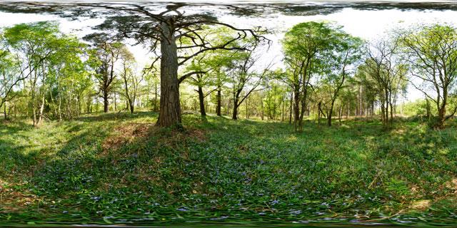 Wakerley Great Wood 2 360° Panorama