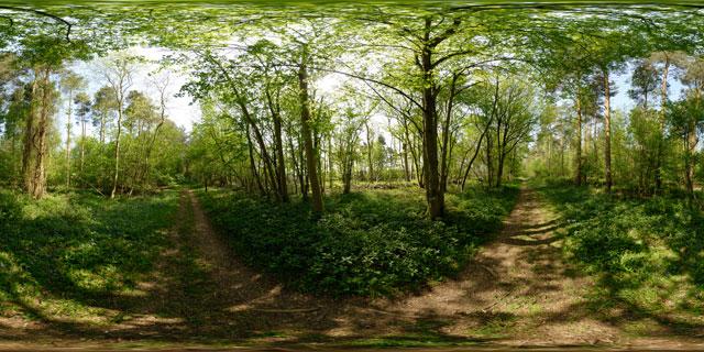 Wakerley Great Wood 3 360° Panorama