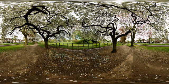 Welland Park – Blossoming Trees 360° Panorama
